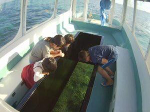 伊野田漁港発グラスボートツアーで見れる魚
