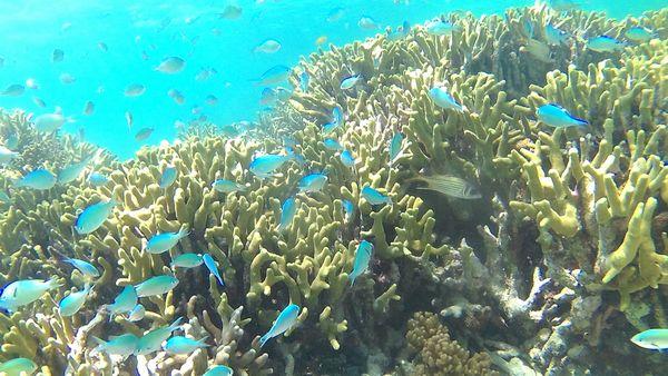 水中観察!サンゴとお魚さん