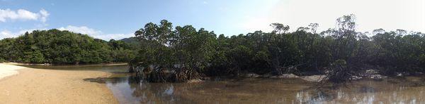 マングローブ生い茂る吹通川