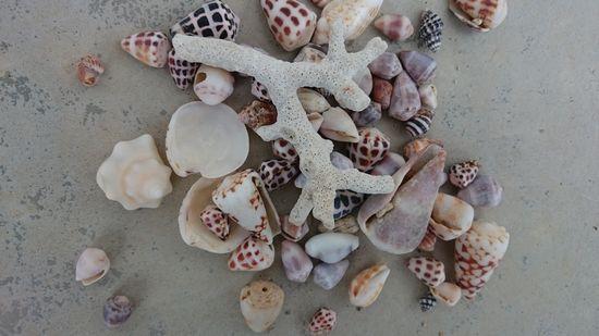ビーチコーミングで貝殻拾い