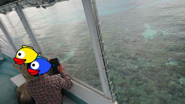 ボート上からでもサンゴがわかりますね!
