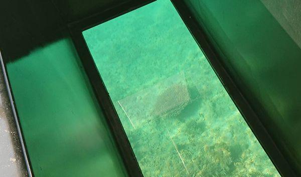 伊野田漁港内でもサンゴです