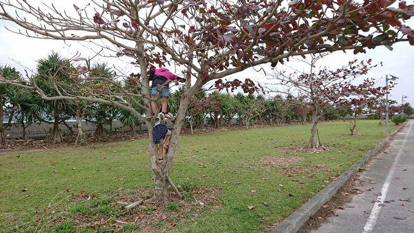 伊野田漁港の遊び方。木登り