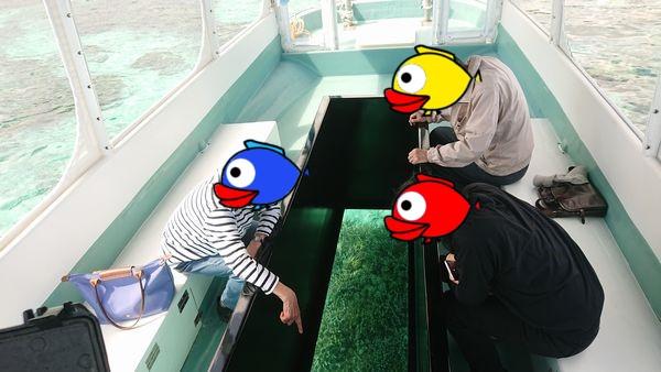 リクエストのお魚さん観察