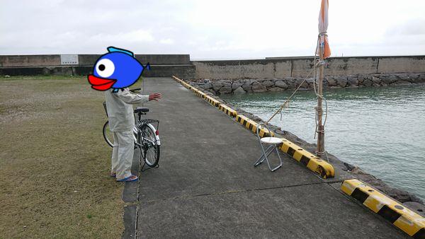 伊野田漁港に大先輩の登場です