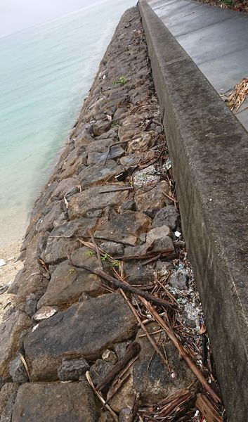 堤防沿いを歩けばすぐに見つかります