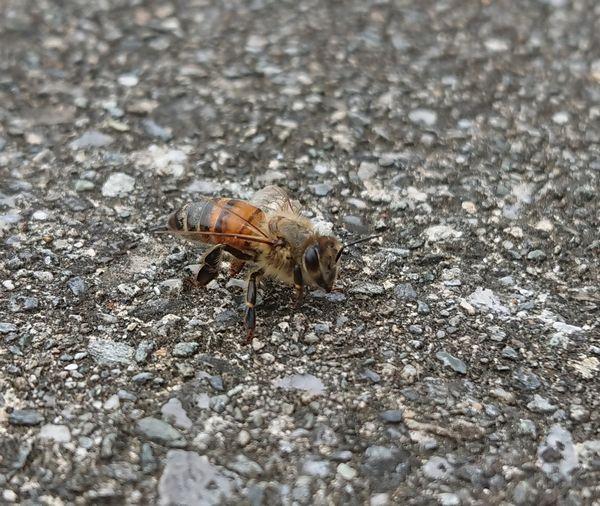 ミツバチの観察に没頭
