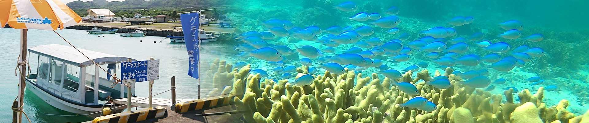 石垣島北部、東海岸でグラスボート!さんご礁の海から