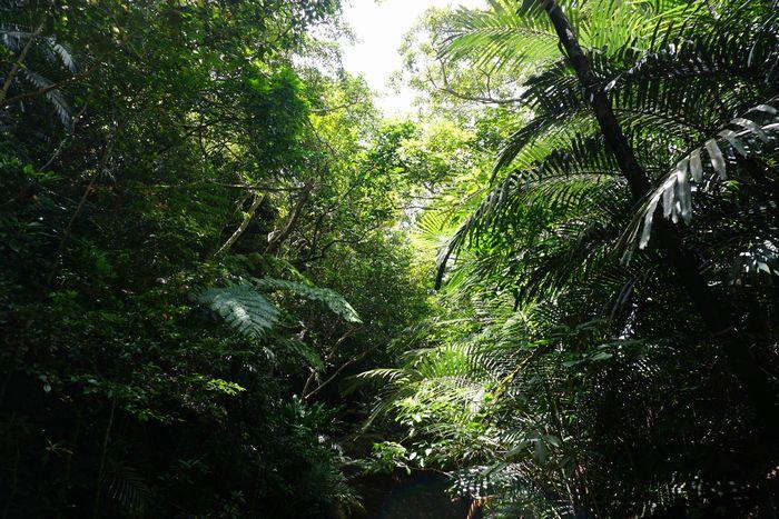 ジャングルの中を進んでいきます。