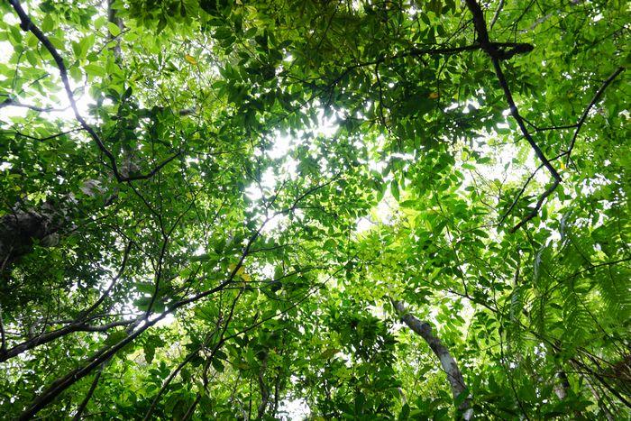 上を見上げると緑が気持ち良いです