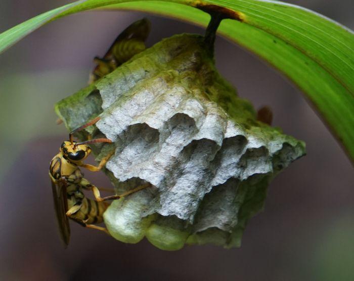 ハチの巣を発見