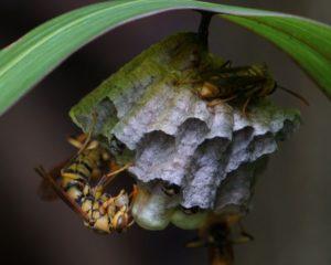 ハチの巣眺めてじっくり観察♪