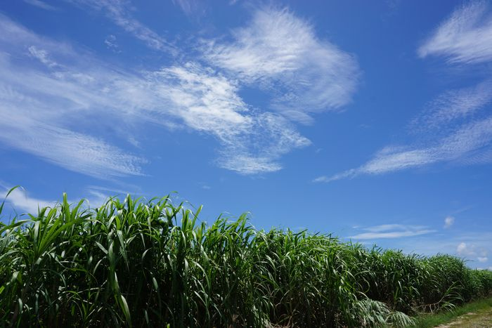 さとうきび畑の見える風景
