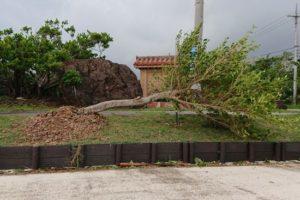台風、次から次へと。対策を含め、参考ブログです!