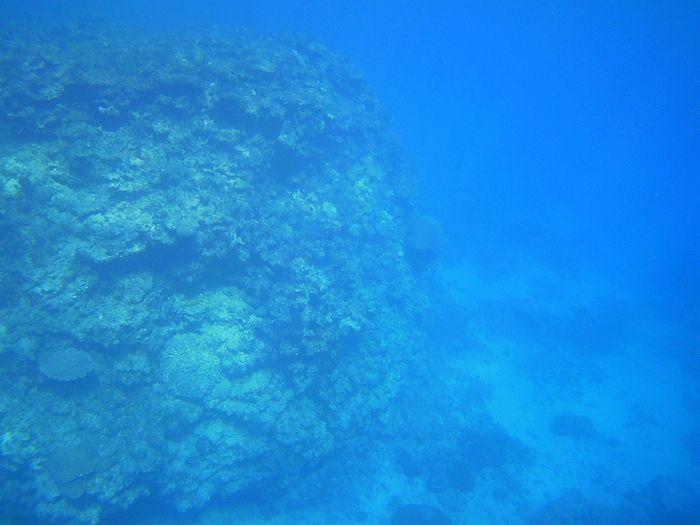 深い場所、水深20mの世界をくっきりお楽しみ頂けます。