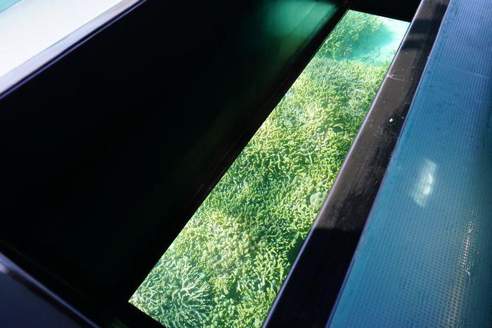 ガラス越しのサンゴ