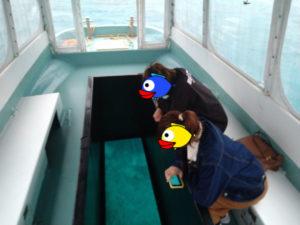 雨の天気でもグラスボートは開催!ほら、水中世界はいつも通りです♪