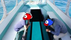冬空は抜けるような青!グラスボート出港です!