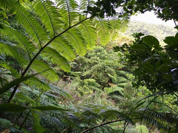 ジャングルですね♪