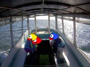 石垣島旅行、最終日はグラスボート!夕方からでも楽しめるアクティビティ♪